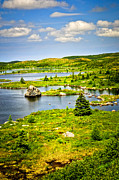 Evergreen Framed Prints - Newfoundland landscape Framed Print by Elena Elisseeva