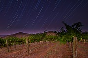 Wine Vineyard Photos - Nocturne by Ryan Hartson-Weddle