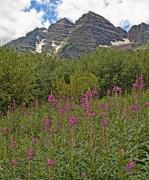 Fire Weed Prints - North and South Maroon Bells and Fireweed Colorado Print by Brendan Reals