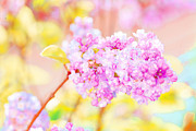 Lilacs Photos - O Happy Day by Bonnie Bruno