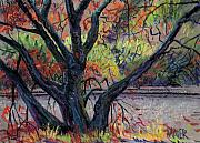 Canyon Drawings - Oak in Niles Canyon by Donald Maier