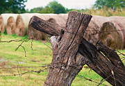 Old Cross Fence Print by Lisa Moore