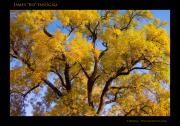 Lightning Wall Art Prints - Old Giant  Autumn Cottonwood Print by James Bo Insogna