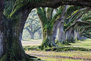 Overhang Photo Framed Prints - Old Growth Trees Framed Print by Jeremy Woodhouse