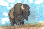 American Bison Originals - On The Range by Don  Gallacher