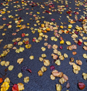 Fall Leaves Photos - On the Road Again by Robert Ullmann