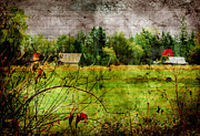 Rural Landscapes Prints - One Red Tree Print by Barbara  White