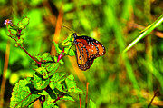 Insects Photo Originals - Orange Butterfly Too by Randy Aveille