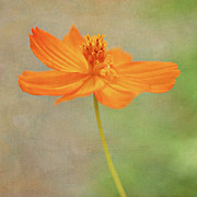San Jose Prints - Orange Flower Print by Pamela N. Martin