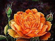 Most Popular Paintings - Orange rose by Zaira Dzhaubaeva
