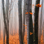Fall Leaves Prints - Orange Wood Print by Evgeni Dinev