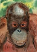 Orangutans Framed Prints - Orangutan Framed Print by Donald Maier