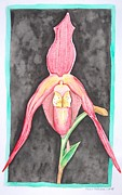 E White Framed Prints - Orchid Framed Print by E White