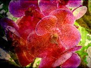 Wendy Butcher Art - Orchid by Wendy Butcher