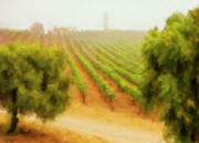 Grapevines Digital Art Framed Prints - Orcutt Vineyard Framed Print by Patricia Stalter