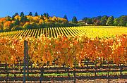 Wine Country Posters - Oregon Wine Country Poster by Margaret Hood