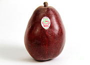 Red Pear Posters - Organic Pear Poster by Photo Researchers