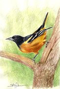 Yellow Beak Paintings - Oriole by Barbara Walker