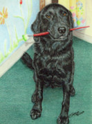 Labrador Retrievers Drawings - Otis-se by Beverly Fuqua