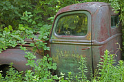 Abandoned Cars Prints - Overgrown Rusty Ford Pickup Truck Print by John Stephens