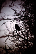Rural Decay Posters Photos - Owl Silhouette by Larysa Luciw