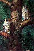 Watercolor And Gouache Paintings - Owls In Moonlight by Frank Wilson