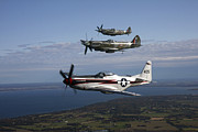 Royal Air Force Posters - P-51 Cavalier Mustang With Supermarine Poster by Daniel Karlsson