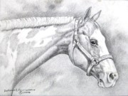 Dorothy Coatsworth Drawings Framed Prints - Paint Horse Framed Print by Dorothy Coatsworth