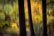 Fall Colors Photos - Painted From Memory by Mary Amerman
