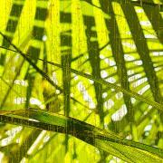 Palm B3 Print by Kaypee Soh - Printscapes