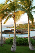 Ko Olina Lagoon Framed Prints - Palm Trees 2 Framed Print by Eddie Freeman