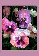 Floral Notecards Posters - Pansies Poster by Dale   Ford