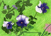 Pansies Drawings Framed Prints - Pansies Framed Print by Isaac Mullens