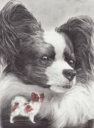 Toy Animals Drawings Framed Prints - Papillon Framed Print by Laurie McGinley