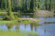 Marilyn Wilson - Paradise Meadows Pond