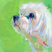 White Maltese Art - Parker by Kimberly Santini