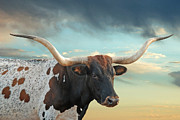 Texas Longhorns Framed Prints - Party Girl Framed Print by Robert Anschutz