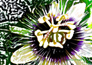 Passion Fruit Digital Art Posters - Passion Flower Poster by James Temple