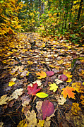 Autumn Leaves Framed Prints - Path in fall forest Framed Print by Elena Elisseeva