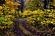 Fall Colors Autumn Colors Posters - Path On McCroys Hill Poster by Kathy Jennings