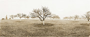 Peach And White Prints - Peach Orchard Gettysburg Print by Jan Faul