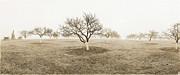 Peach Orchard Gettysburg Print by Jan Faul