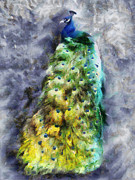 Contemporary Bird Painting Acrylic Prints - Peacock Portrait Acrylic Print by Jai Johnson
