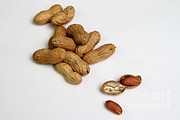 Allergic Prints - Peanuts Print by Photo Researchers, Inc.
