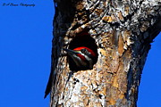 Birdwatching Originals - Peeking out by Barbara Bowen