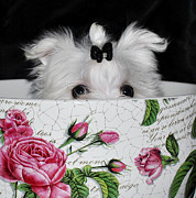 Maltese Puppy Photos - Peeps  by Jenny McCullough