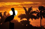 Pelican At Sunset Print by Dan Friend