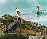 Wild Birds Digital Art Originals - Pelicans At Laguna Rock by Todd L Thomas