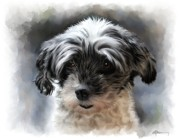 Pet Paintings - Pet Dog Portrait by Michael Greenaway