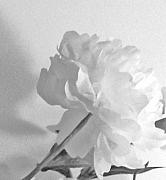 Petals Print by Marsha Heiken